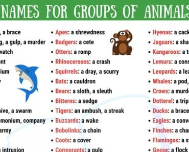 Groups of Animals in English