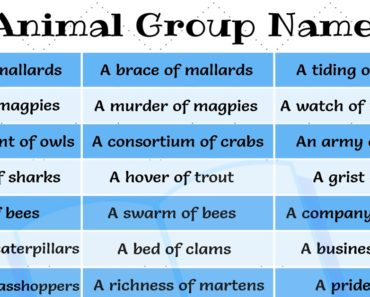Names for Groups of Animals
